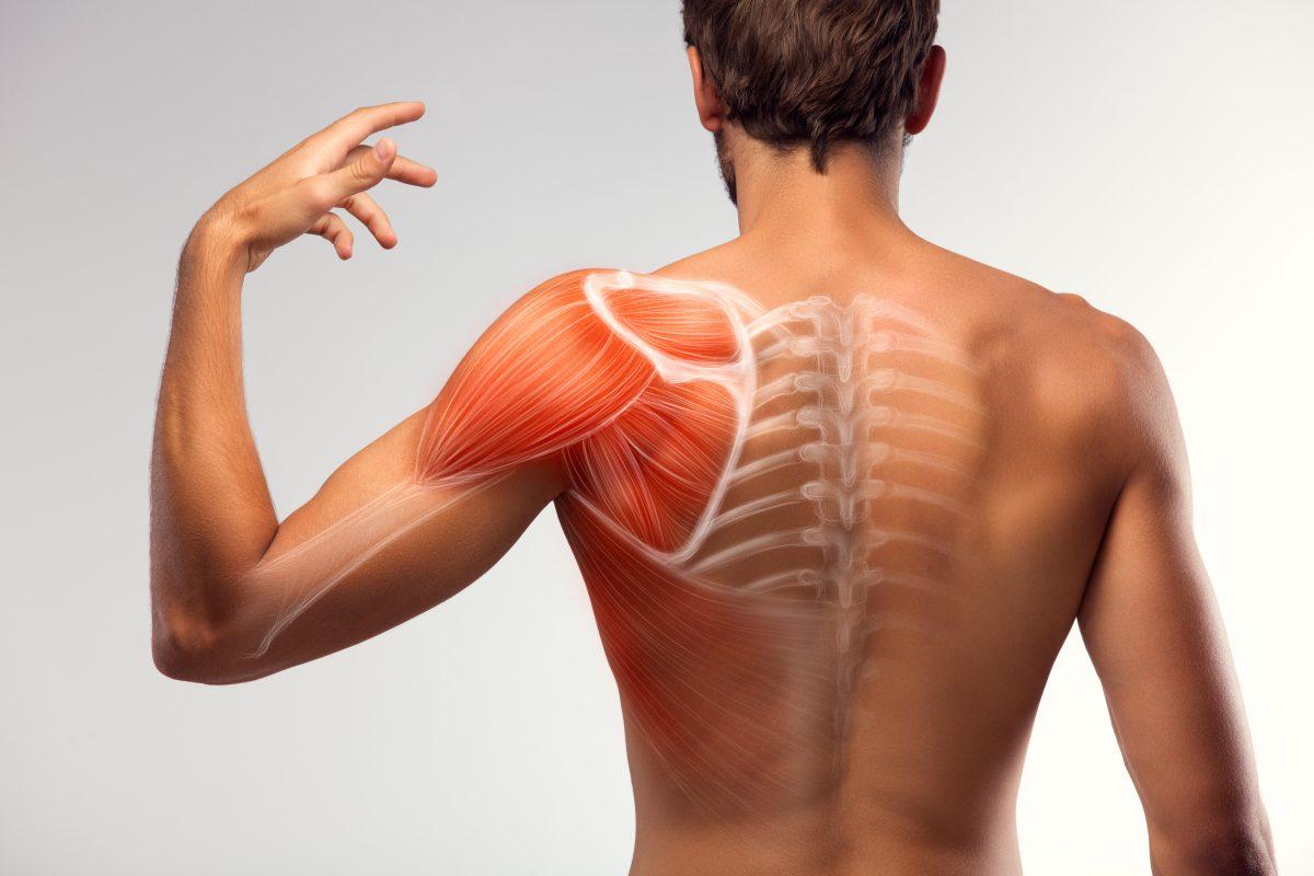 Bessere Muskelregeneration durch Lichttherapie